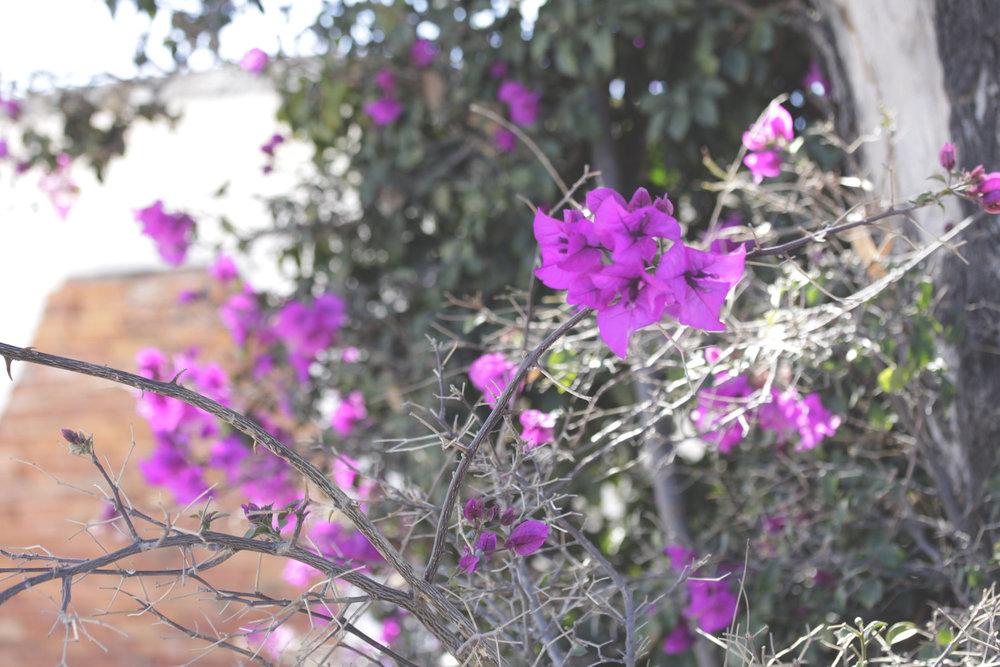 Rebecca+Mir+Grady+Floral+Oaxaca.jpeg