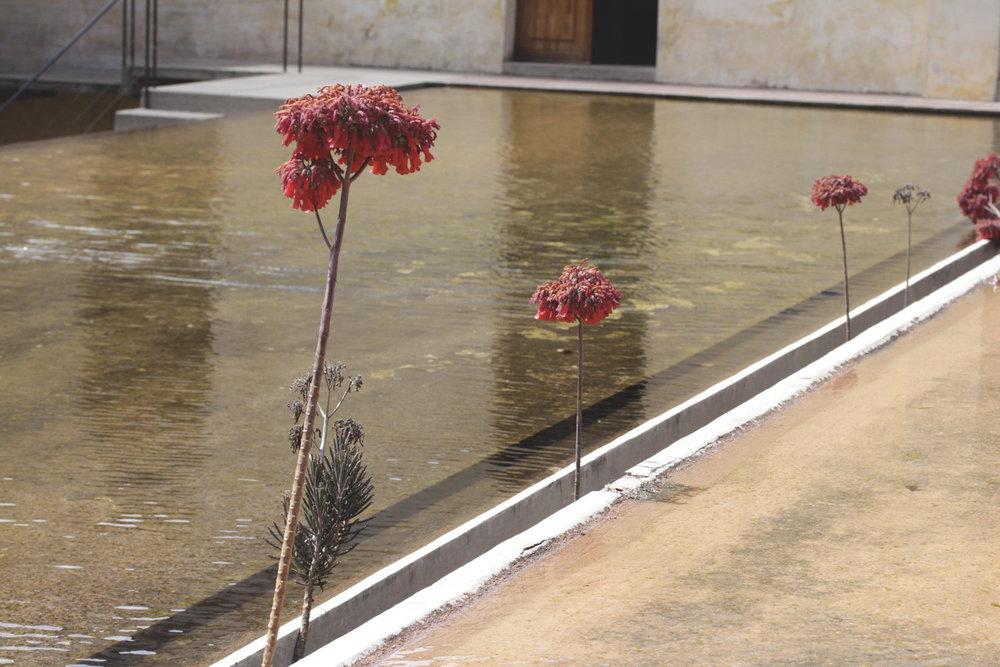 Rebecca+Mir+Grady+Oaxaca+Floral+Water.jpeg