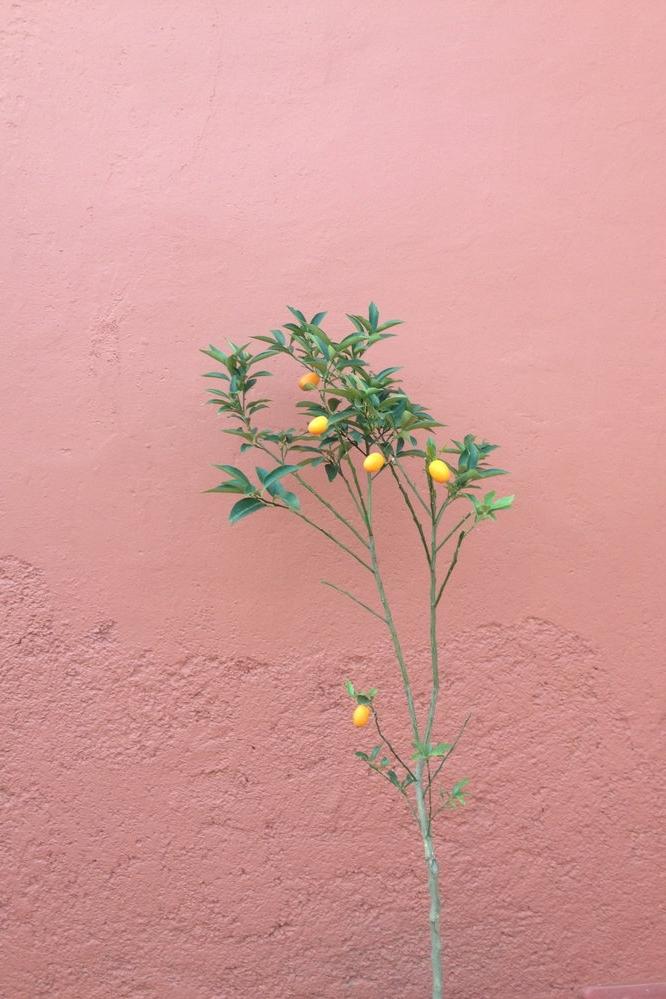 Rebecca+Mir+Grady+Oaxaca+Plant+Life.jpeg