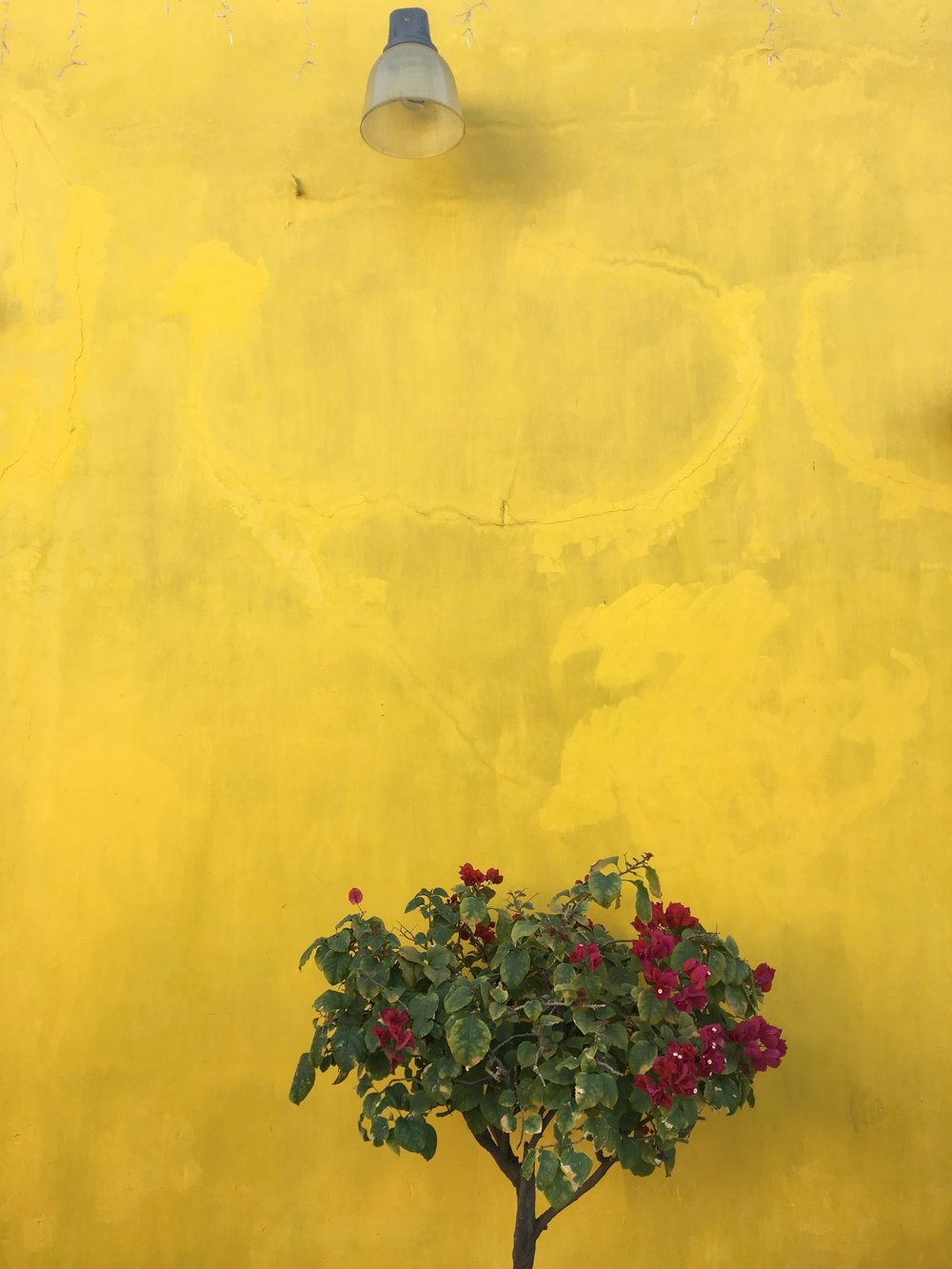 oaxaca city yellow wall