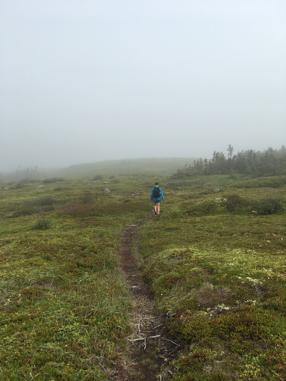 morning foggy hike in terence bay nova scotia