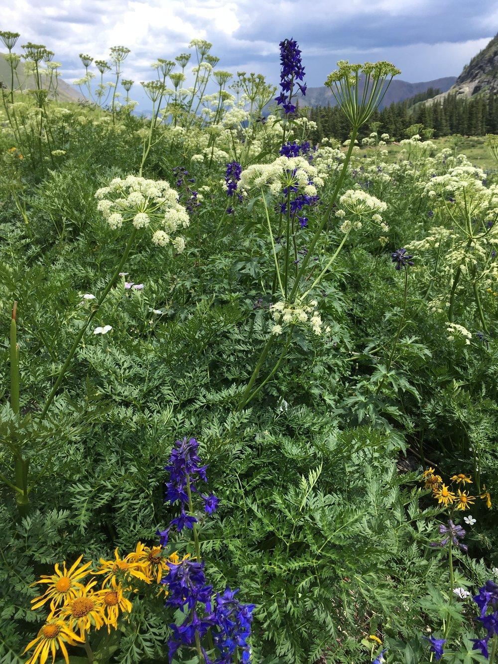 wildflowers rebecca mir grady