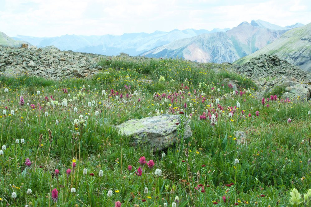 ice lake wildflowers colorado rebecca mir grady