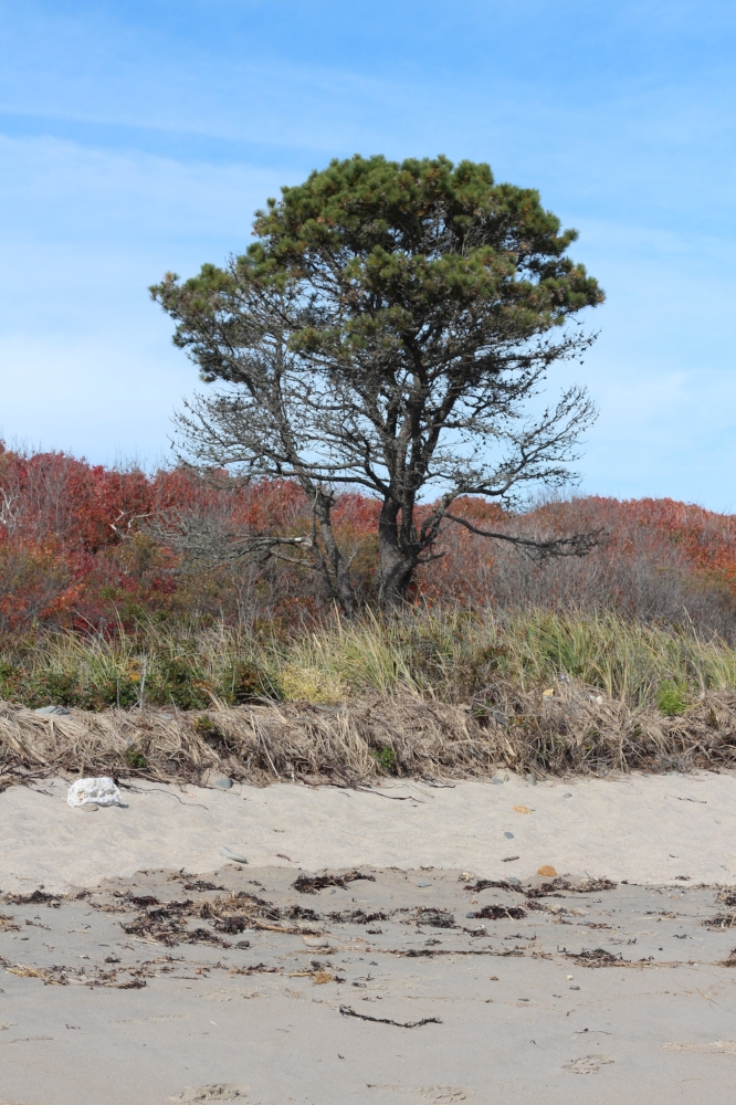 Fall at Laudholm Beach
