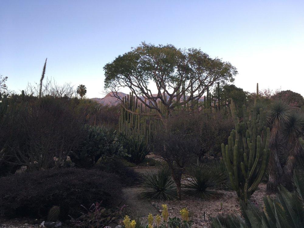 Jardín Etnobotanica