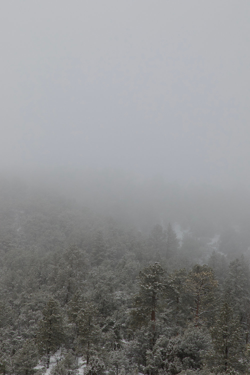 snowstorm on the chamisa trail
