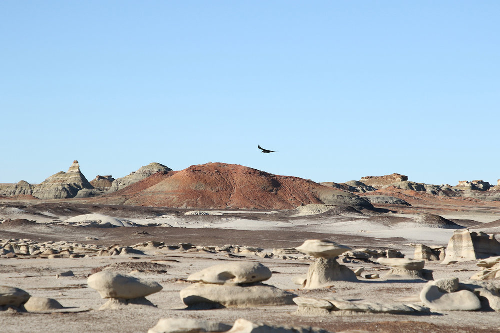 a bird flying over the Bisti De Na Zin wilderness