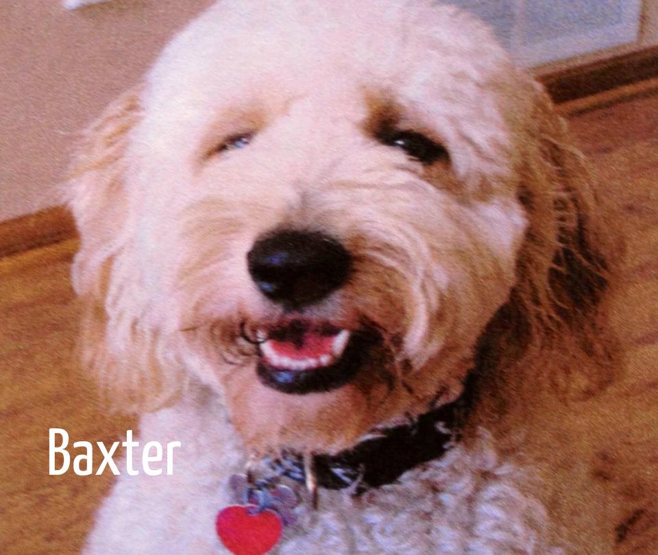 Baxter 2.jpg