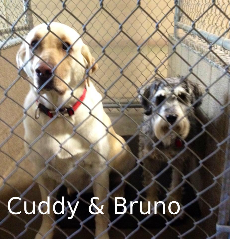 Cuddy & Bruno.jpg