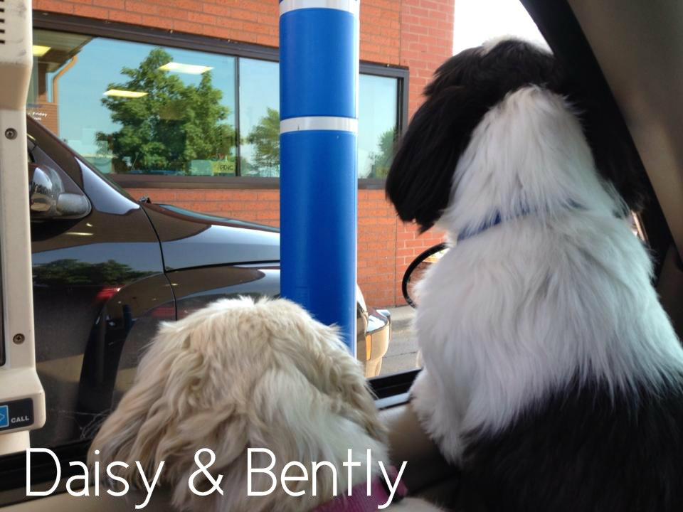 Daisy & Bently.jpg