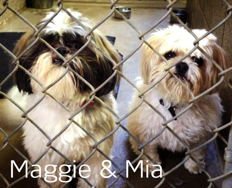 Maggie & Mia.jpg
