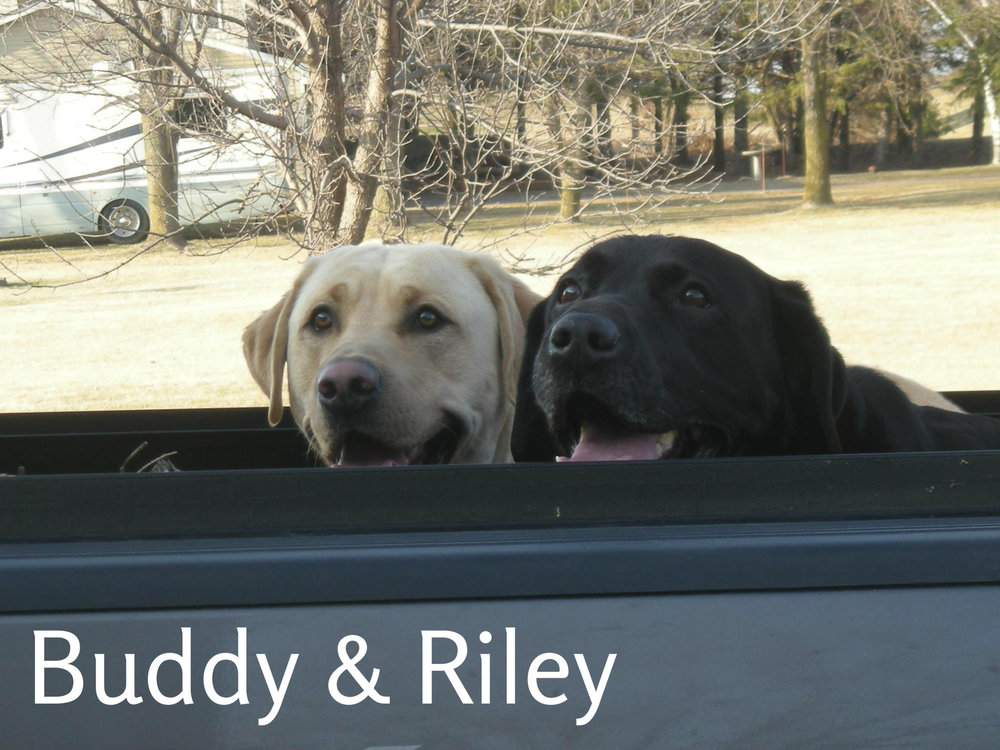 Riley & Buddy.jpg