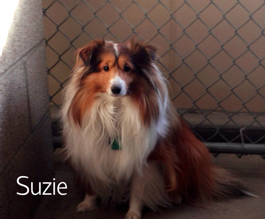 Suzie.jpg