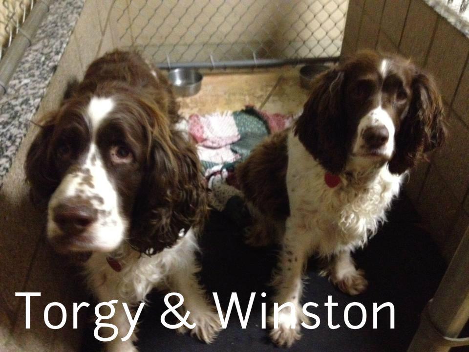 Torgy & the late Winston.jpg