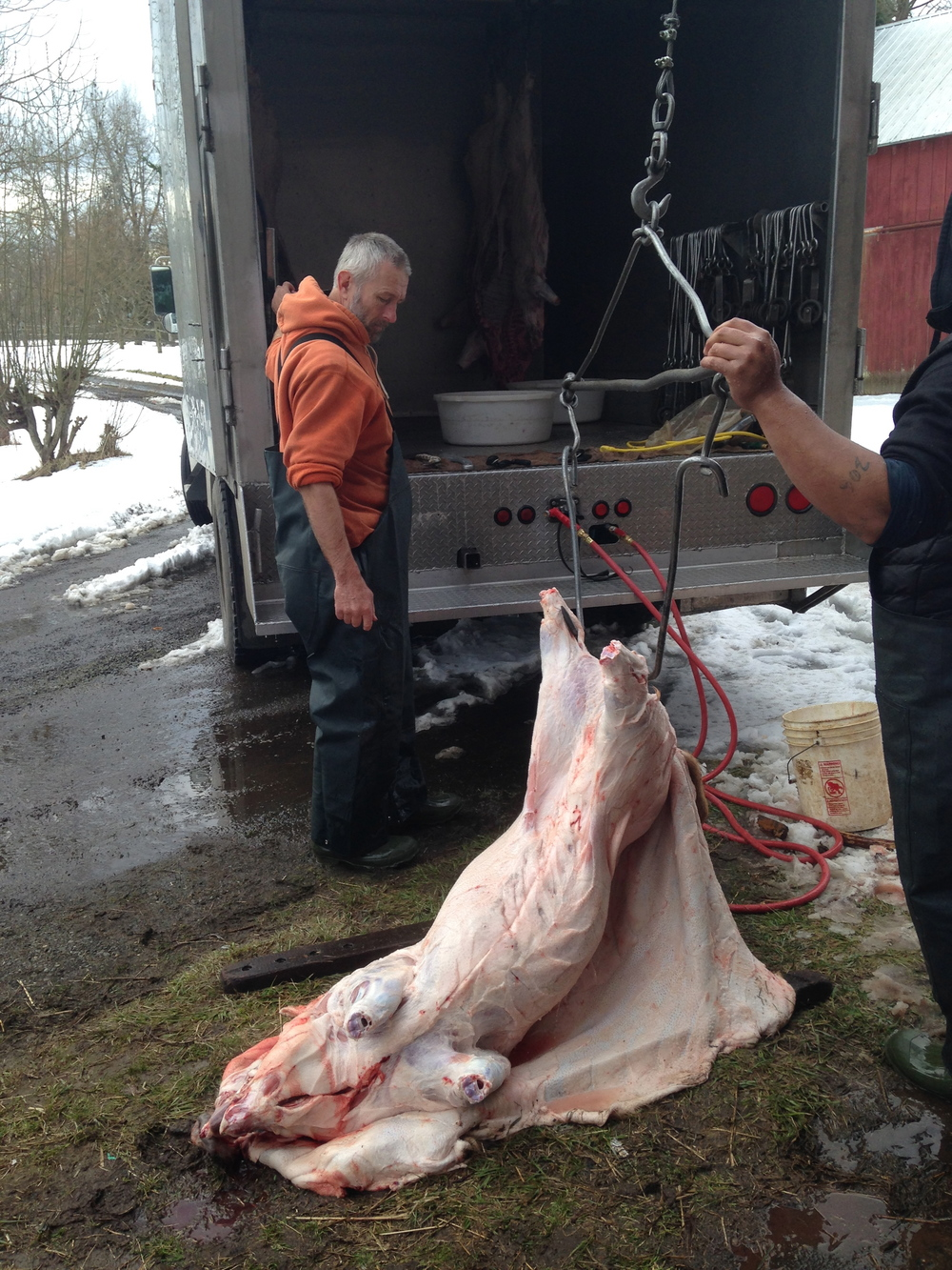 Hauling the pig up