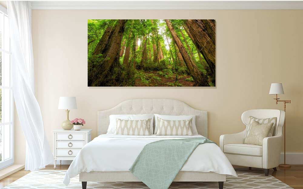 Muir Woods, Mill Valley, CA Wall Decor