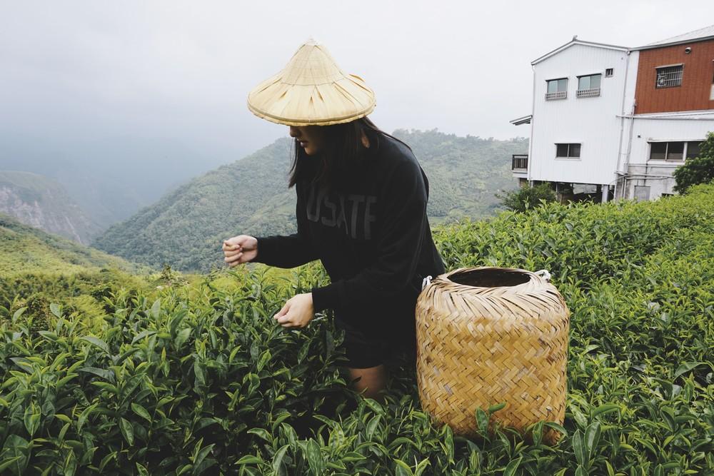 teafarm_roslyn_ripejournal_taiwan