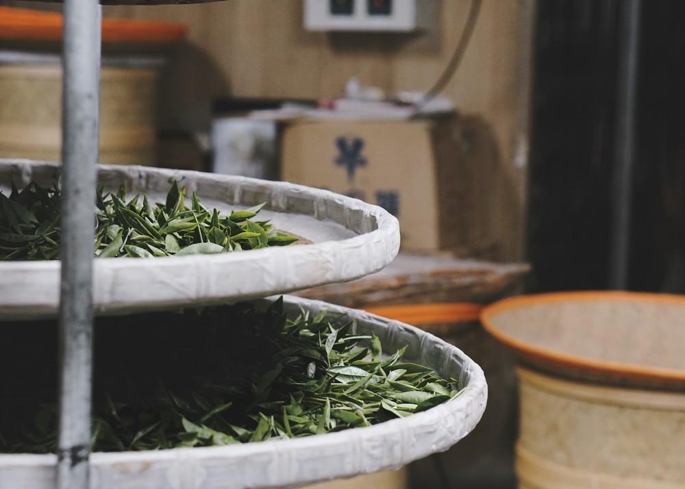 teaprocess1_taiwan_ripejournal