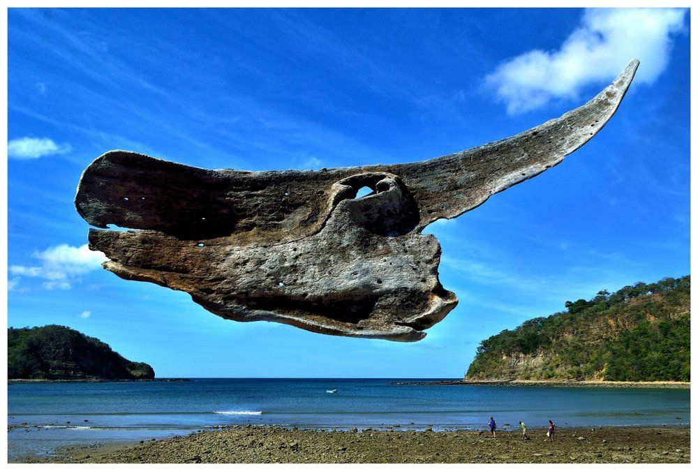 Rhenda´s Shark.....Nacascolo, San Juan del Sur, Nicaragua