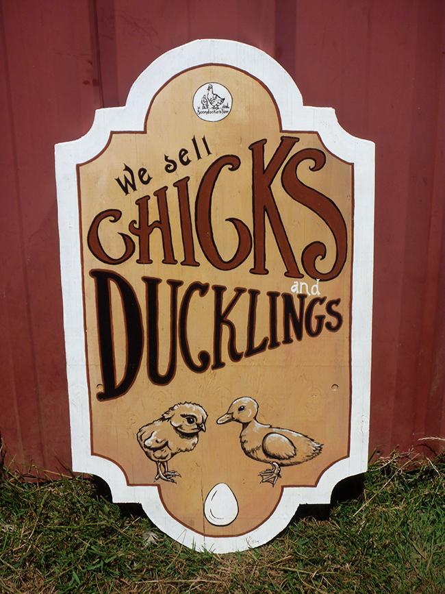 Chicks & Ducklings