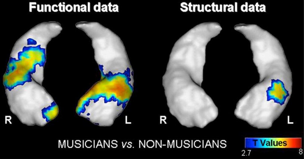 Hyde et al., Journal of Neuroscience, 29:3019-25, 2009 | Groussard et al. PLoO One 5:e13225, 2010