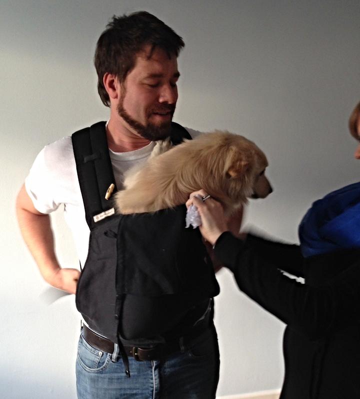 Baby Bjorn... Puppy Bjorn... whatever.