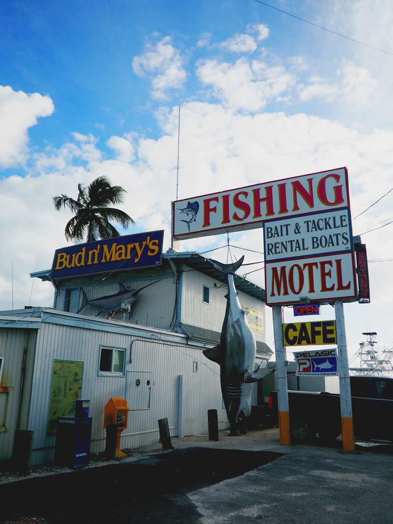 Believe it or not, that shark is not real! | Bud N' Mary's - Islamorada, FL