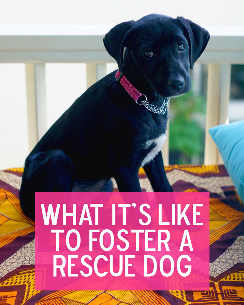 A few things you should think about before fostering a dog. For example, could you even resist those eyes?