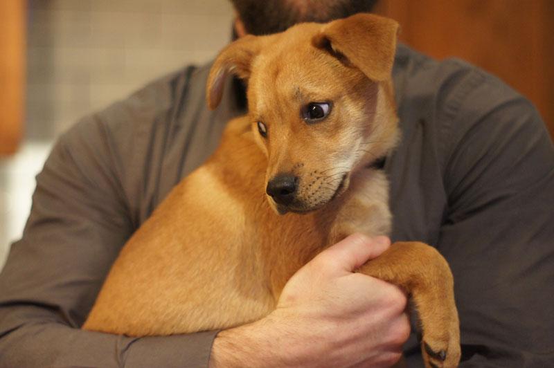 Warren, our first foster doggie.