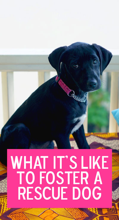 Thinking about fostering a dog? Here's everything you need to know.