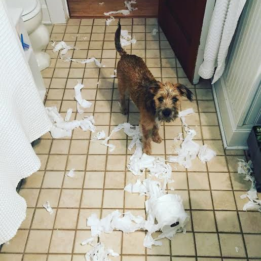 The cons of having a puppy.