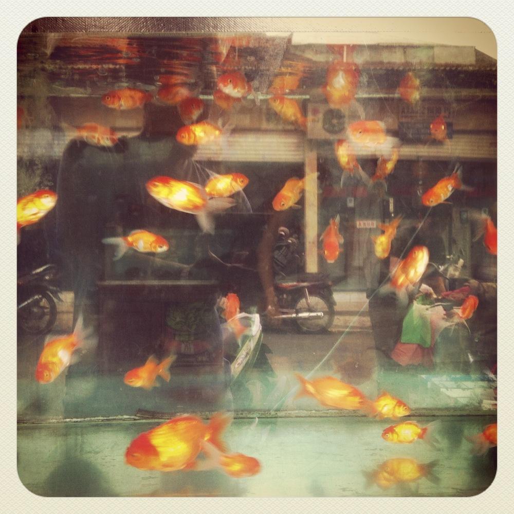 Pet Shop Bali