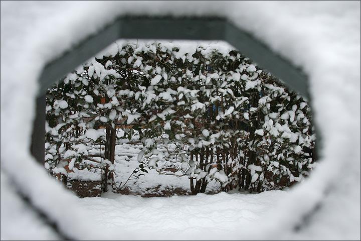 Copy of Piercing Through Snow