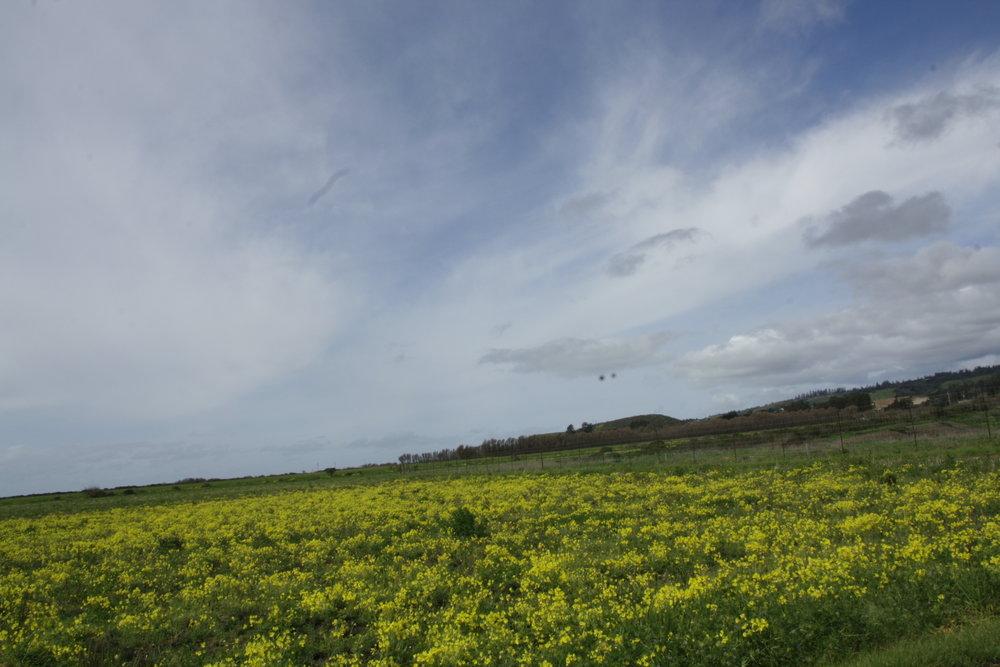 california22.jpg