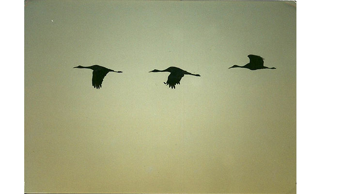 Birds8.jpg