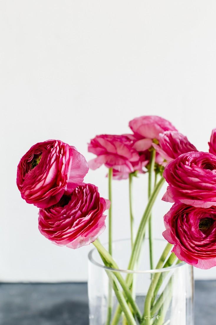 Winston flowers by M Piazza, ranunculus.jpg