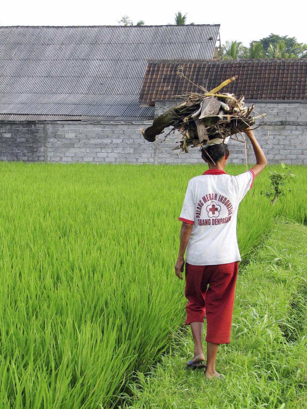 """Hashing through Rice Fields"" - Bali"