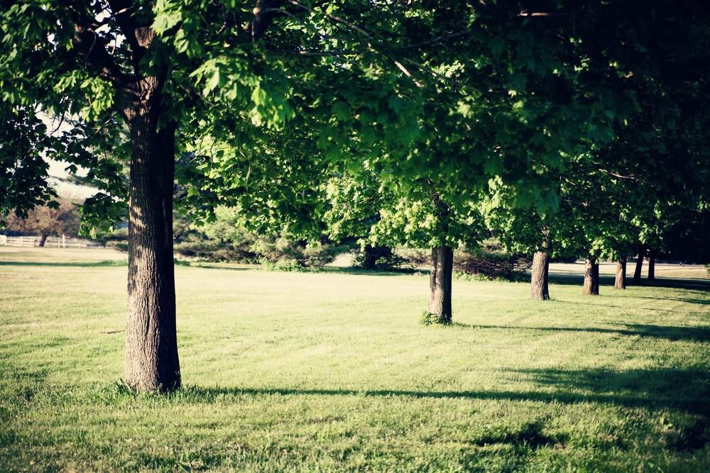 caumsett-vintage-trees-web.jpg