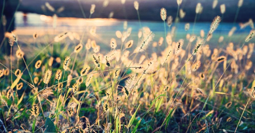 grass-sunset-vintage-caumset-web.jpg