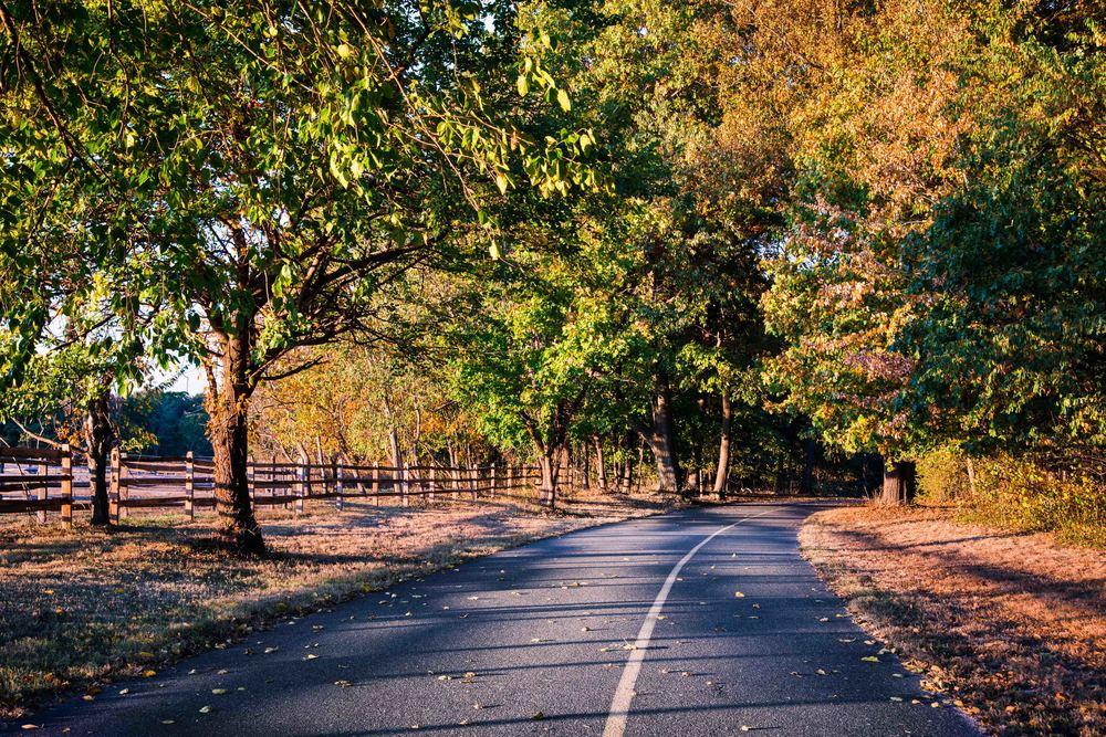 caumset-park-fall-road-web.jpg
