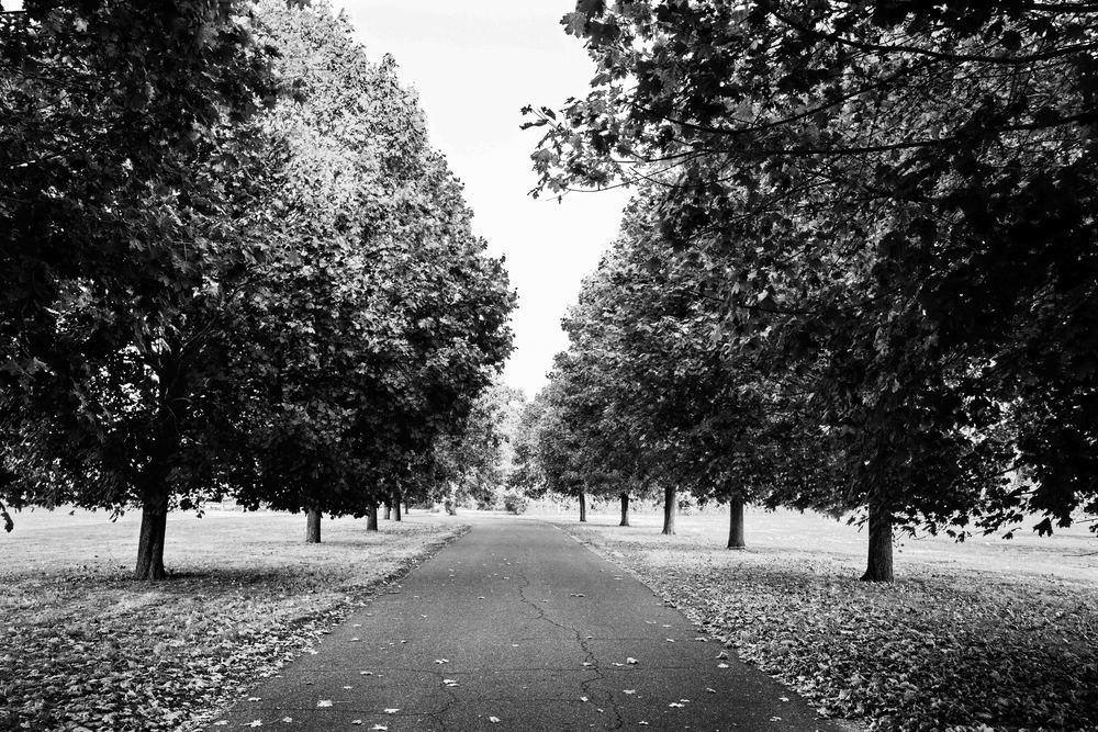 fall-forest-path-web.jpg