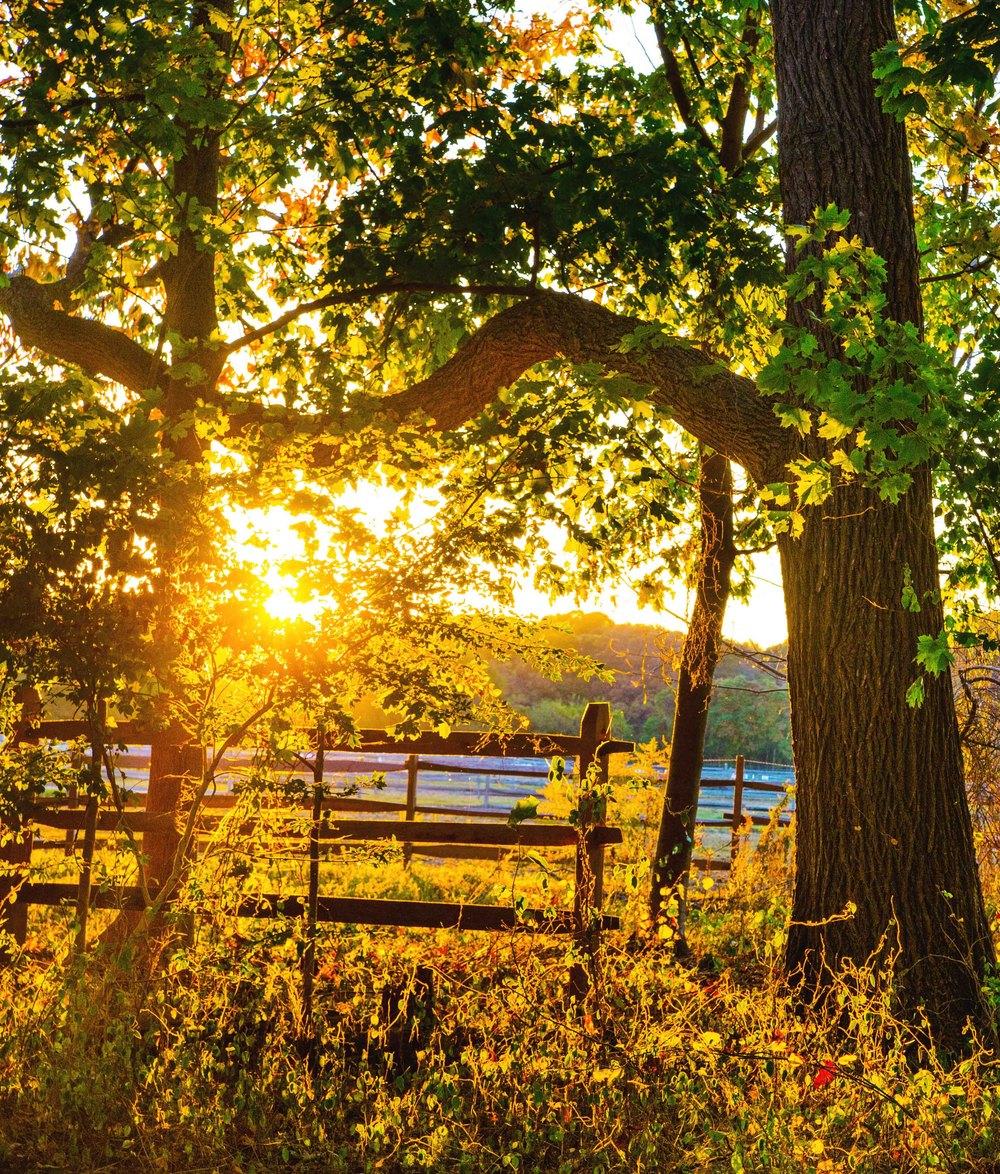 sunset-light-fall-caumset-web.jpg