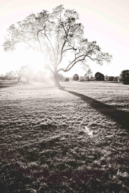 tree-bw-caumset-park-web.jpg