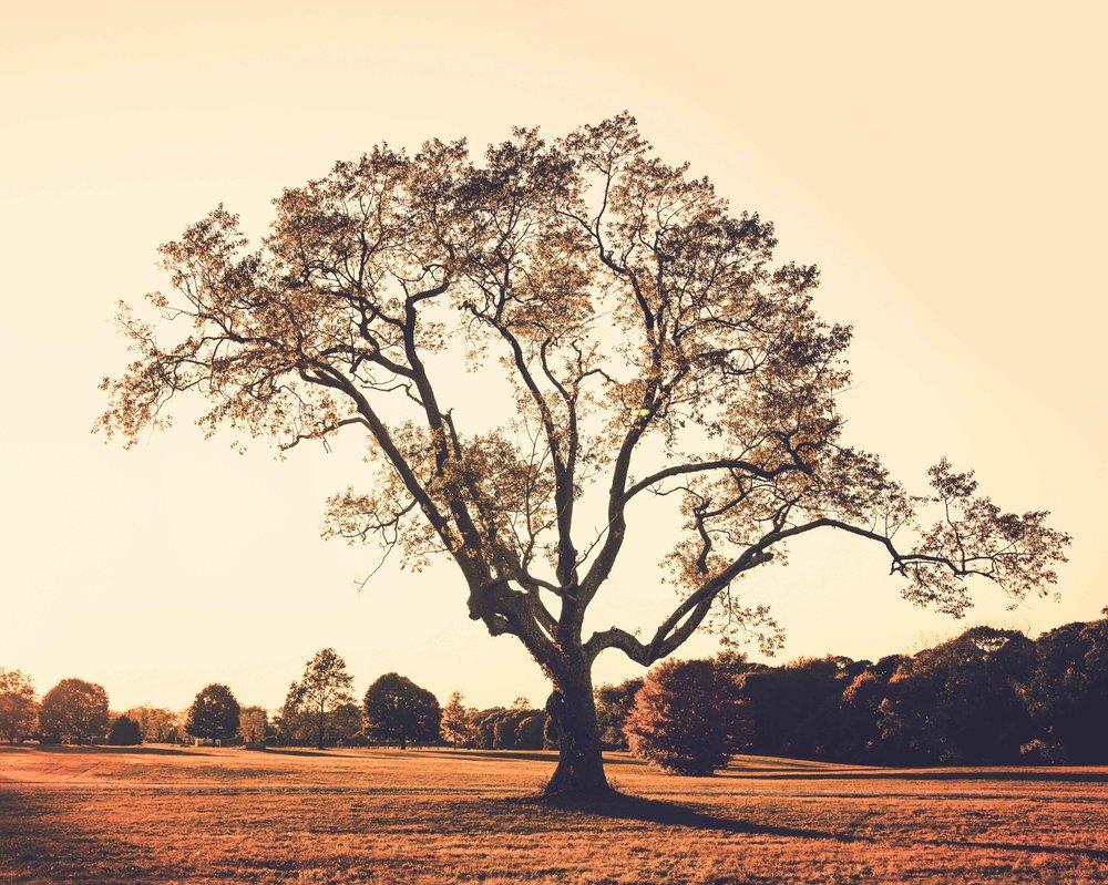 tree-warm-vintage-caumset-park-web.jpg
