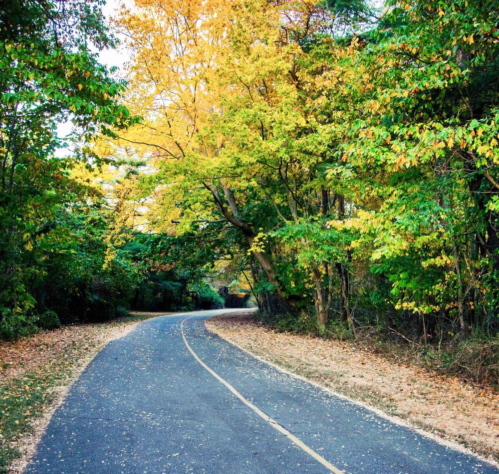 fall-forest-road-web.jpg