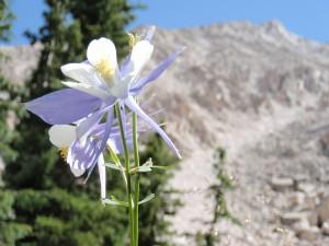 Flower-Dreams.jpg