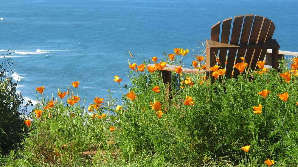 Chair + poppies at Point special!.JPG