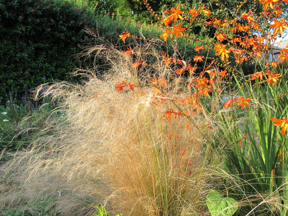 Home garden 8-24-12 022.JPG