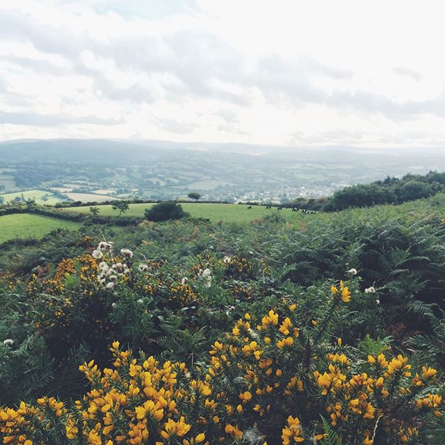 During our weekend walk, we were greeted with an abundance of gorse in full bloom on Dartmoor. A shrub known for its extensive bloom period and its great source of pollen and nectar for Honey Bees. Have you read our recent blog post? Head on over to our blog to read up on the ways you can help save our bees! 🐝(link in bio) . . . . #tealovers #savethebees #devonliving #teabreak #timefortea #dartmoor
