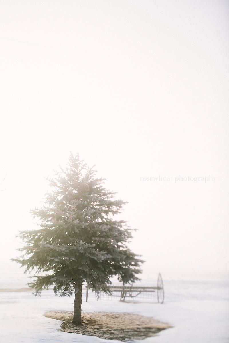 TiltShiftTrees-3.jpg